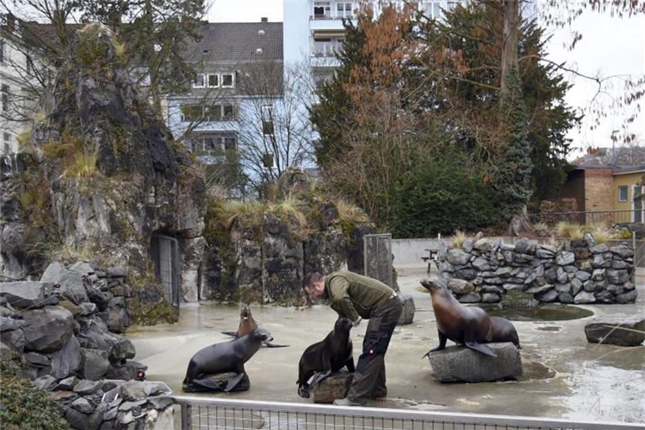 Kölner Zoo Geschlossen